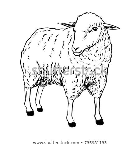 Fekete bárány fehér illusztráció boldog természet Stock fotó © colematt