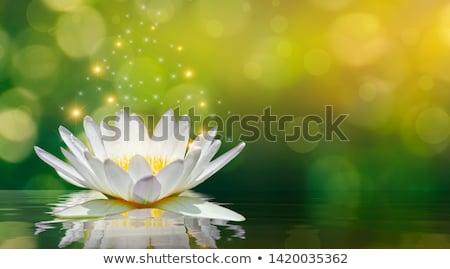 Fairy and lotus Stock photo © colematt