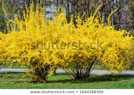 Tavaszi virág természet virág tavasz kert háttér Stock fotó © bdspn