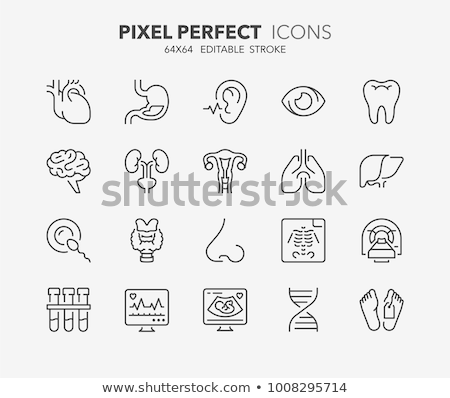 Uterus Vector Line Icons Stock photo © smoki