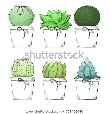 cactus · desierto · aislado · planta · blanco · vector - foto stock © arkadivna
