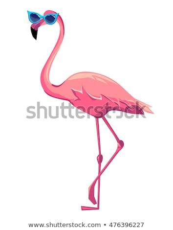 Cartoon Flamingo segno illustrazione divertente Foto d'archivio © bennerdesign