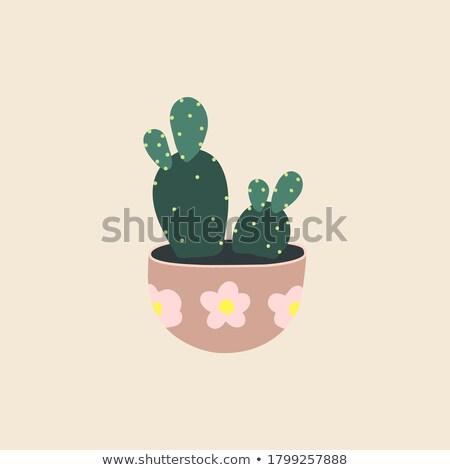 Oda bitki büyüyen noktalı pot Stok fotoğraf © robuart
