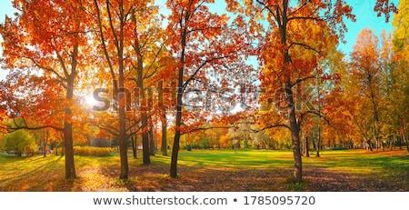 Sun shining brightly through Autumn garden Stock photo © lovleah