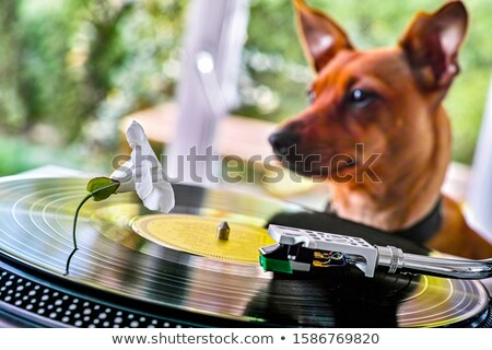 Concept of a funny dog near a turntable with vinyl disc Stock photo © tilo