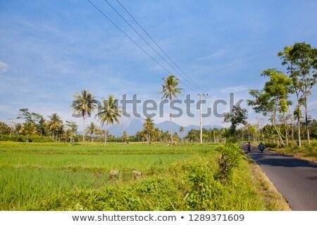 Foto stock: Paisagem · verde · arroz · campos · palmeiras · vulcão