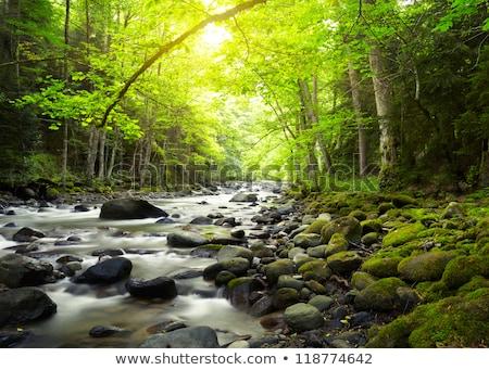Cascada Georgia grande Central Park forestales naturaleza Foto stock © borisb17