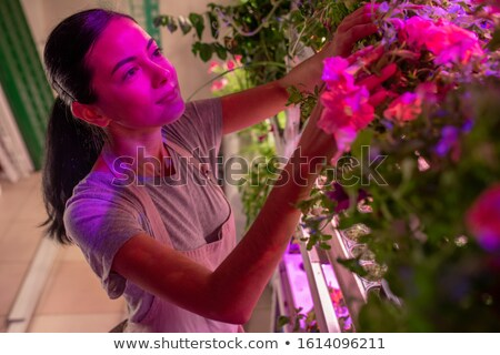 Pretty young female selectionist or gardener in workwear looking at petunias Stock photo © pressmaster