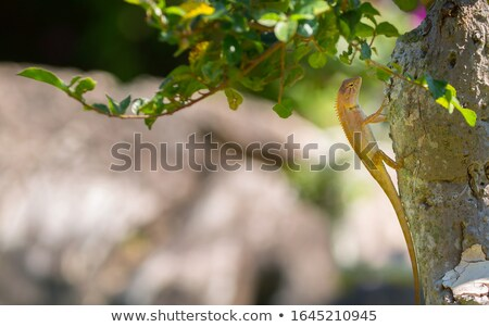 spa gecko stock photo © sahua