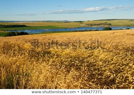 tavacska · termény · Saskatchewan · Kanada · víz · fű - stock fotó © pictureguy