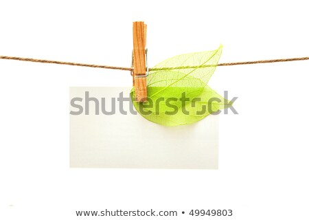 Stock photo: Green leaves series hang on rope