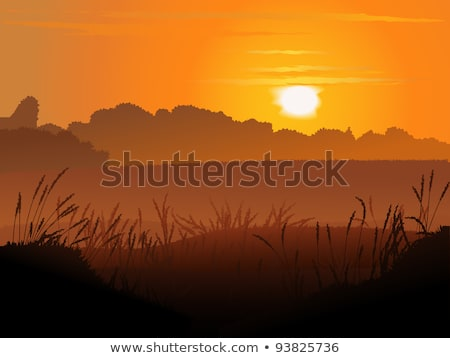 Stock photo: rye silhouette vector background - sunset