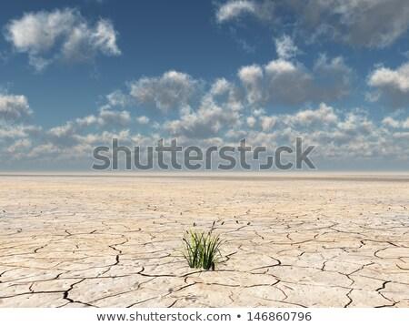 Toprak ölü bitkiler kırık kuru kurutulmuş Stok fotoğraf © skylight