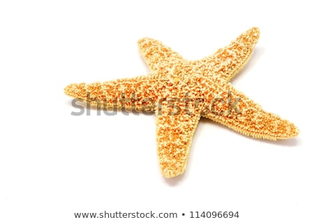 Red Sea star on the white sand beach stock photo © ozaiachin