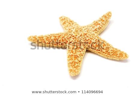 Vörös-tenger csillag fehér homok tengerpart víz textúra Stock fotó © ozaiachin