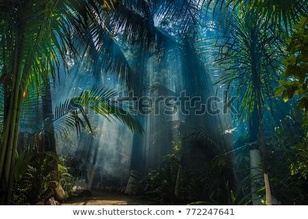 тропические · дороги · растительность · сторона · синий - Сток-фото © dmitry_rukhlenko