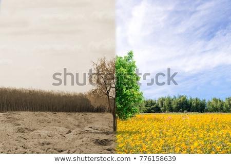 Természet rombolás gyönyörű tájkép nehéz szennyezés Stock fotó © smithore