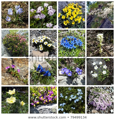 flower bed in mountains stock photo © alex_davydoff
