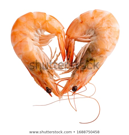 two shrimps Stock photo © Antonio-S