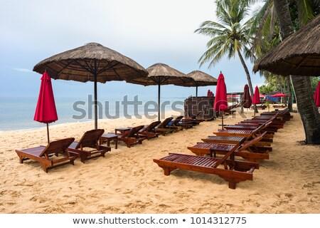 trópusi · tengerpart · alacsony · évszak · tengerpart · fa · természet - stock fotó © moses