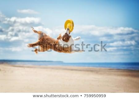 собака пляж играет небе воды Сток-фото © Kuzeytac