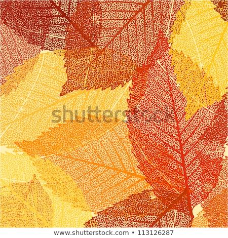 Dry autumn leaves template. EPS 8 Stock photo © beholdereye