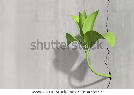 new life growing from concrete stock photo © unikpix