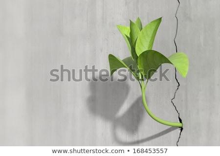 зеленый · завода · растущий · треснувший · земле · Новая · жизнь - Сток-фото © unikpix