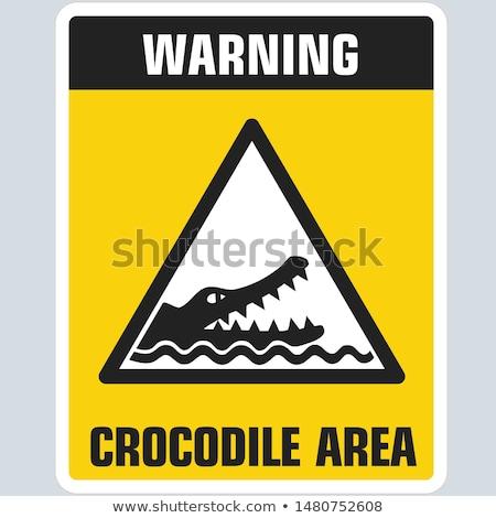 Krokodil vierkante eenzaam hoofd boven water Stockfoto © vwalakte
