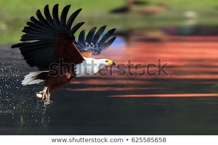 zuidelijk · mus · veren · vogel · bad · water - stockfoto © forgiss