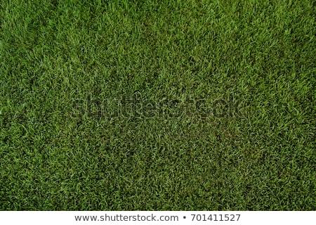 Yeşil çim yeşil ot mavi bulutlu gökyüzü Stok fotoğraf © snyfer