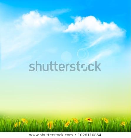 Joaninha grama corrida lâmina grama verde Foto stock © taden