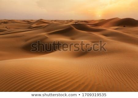 Marokkó · Szahara · sivatag · homok · égbolt · nap - stock fotó © hofmeester