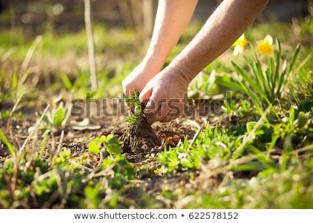 Capina jardim mulher trabalhando próprio menina Foto stock © Makse