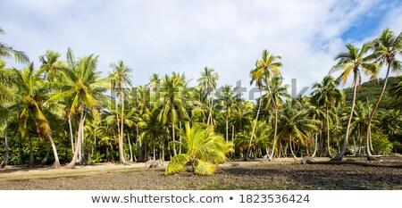 Sűrű dzsungel szőlő park Thaiföld erdő Stock fotó © smithore