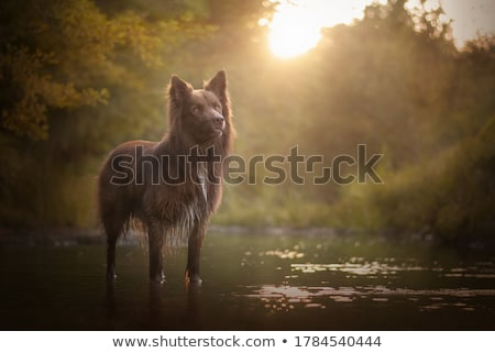 male dog Stock photo © willeecole