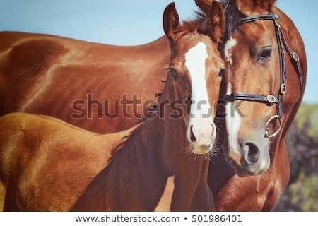 mare and colt stock photo © vanessavr