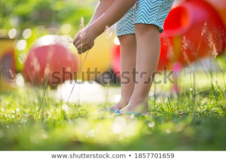 Boy plucking flowers in a garden Stock photo © bmonteny