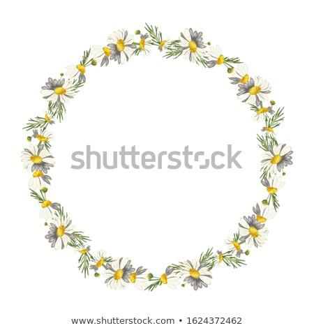 arrosoir · motif · de · fleur · faible · isolé · blanche · eau - photo stock © zhekos