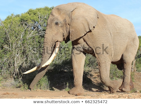 Touro elefante quebrado presa grande água Foto stock © JFJacobsz