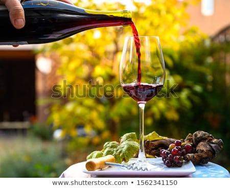 Francia borászat fekete szőlő természet gyümölcs Stock fotó © tilo