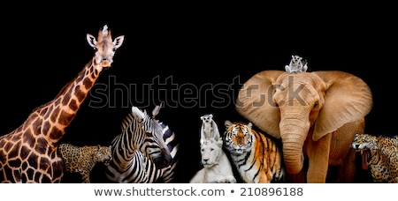 A group of animals are together on a black background with text  Stock photo © art9858