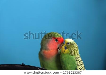 нежность изображение человека целоваться девушки Сток-фото © pressmaster
