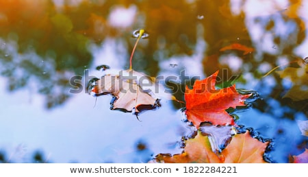 лодка поверхности воды воды морем лист Сток-фото © ankarb