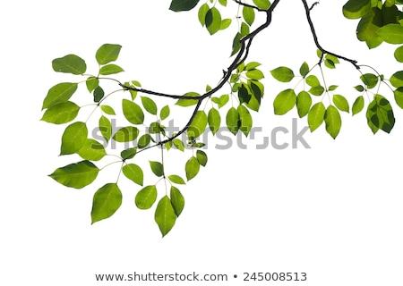 Mavi gökyüzü doğa yeşil arka Stok fotoğraf © unweit