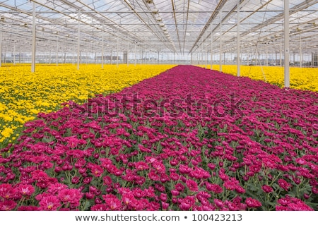 Nursery Greenhouse Interior Stock photo © arenacreative