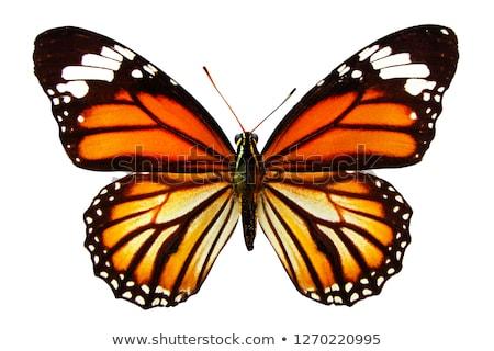 vlinder · bloem · kleurrijk · vergadering · kamille · bloemen - stockfoto © mady70