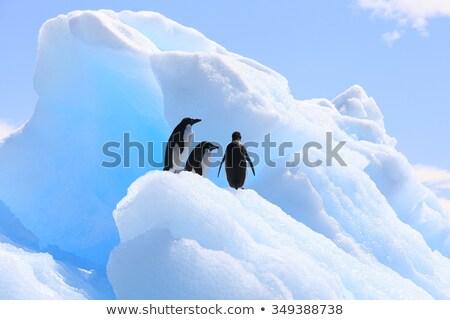 Pingvin jéghegy illusztráció tenger madár tél Stock fotó © adrenalina