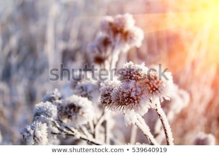冬 日没 市 家 建物 太陽 ストックフォト © inoj