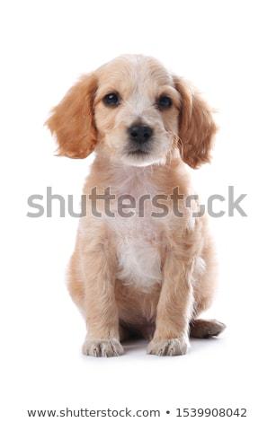 犬 立って 笑みを浮かべて ストックフォト © Twinkieartcat